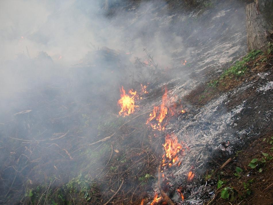 田川地区焼畑の火入れも盛んです