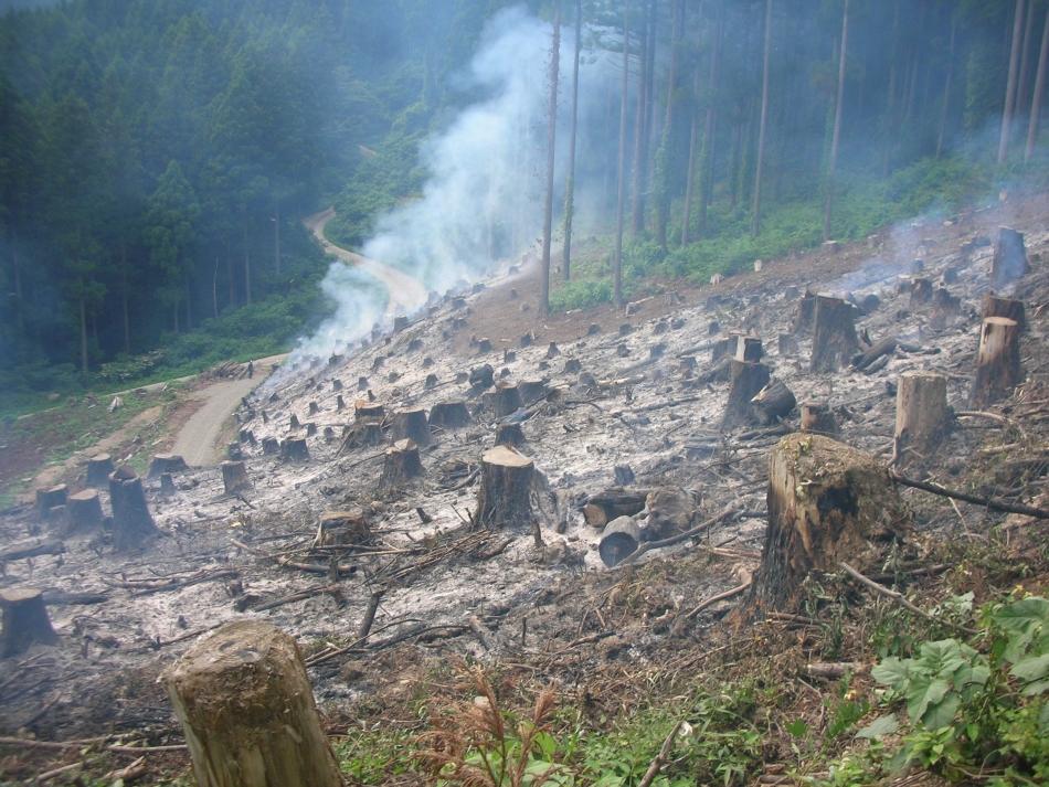 温海町森林組合さんの焼畑
